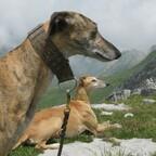 Tarik und Emrys genießen die Westalpen